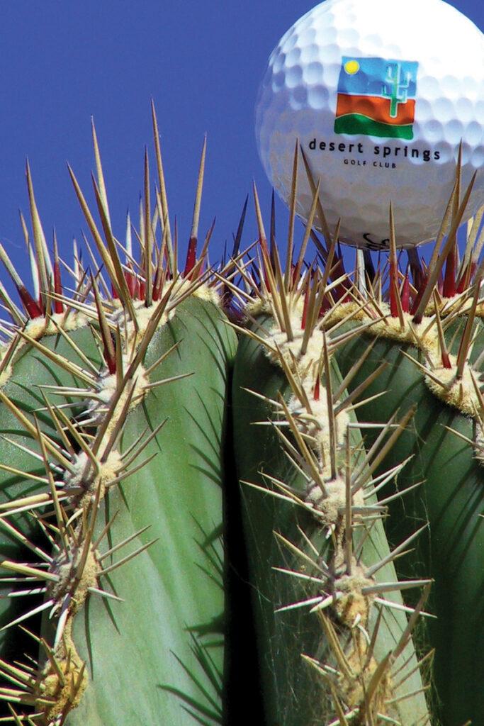 Cactus 02 RGB (1)